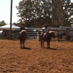 Ponies taking the blue at a horse show